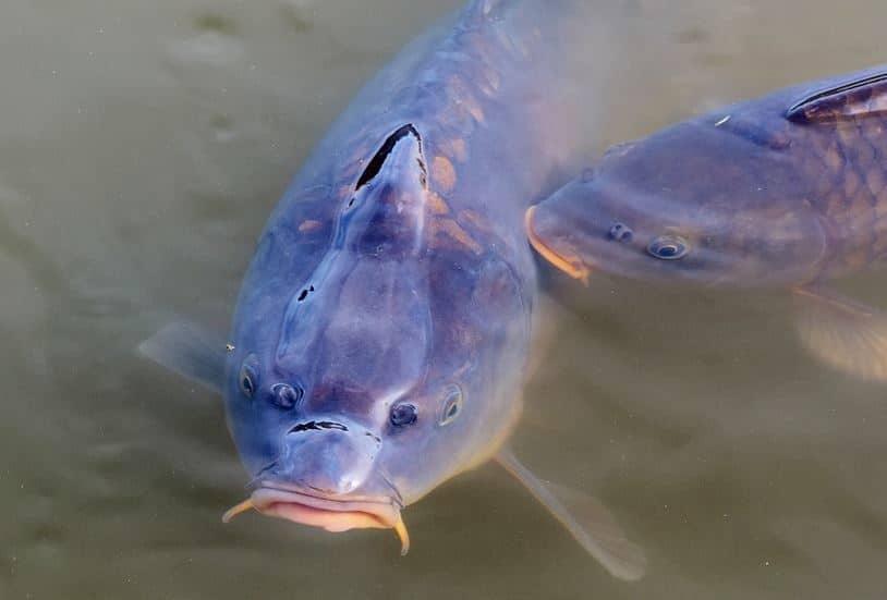 Comment promouvoir la location de son étang pour la pêche ?