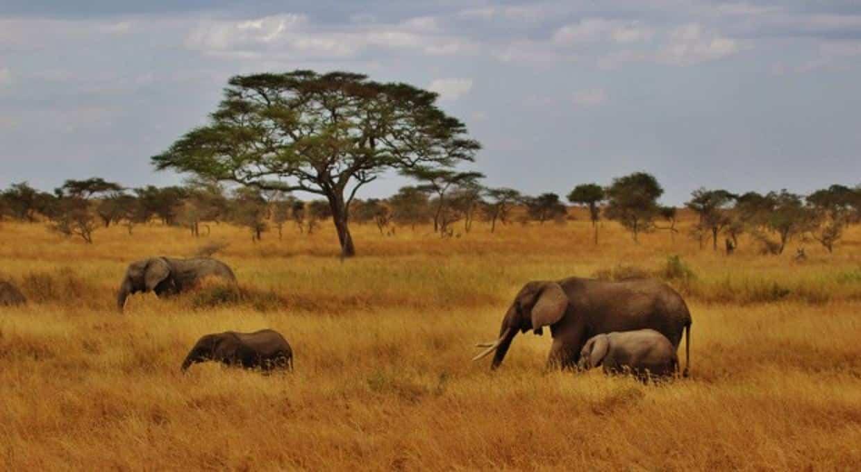 Un voyage en Tanzanie pour des expériences inoubliables